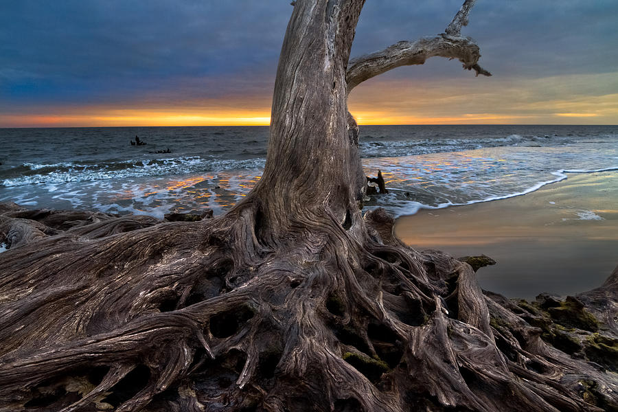 Driftwood On Jekyll Island Photograph  - Driftwood On Jekyll Island Fine Art Print