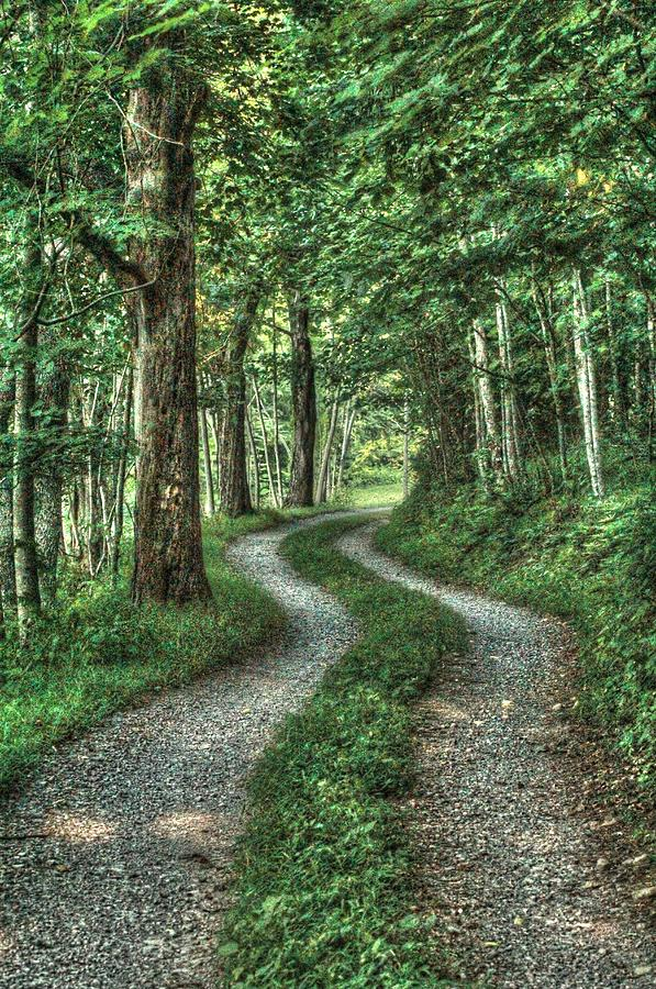 Country Lanes Photograph - Driveway Out by Heavens View Photography