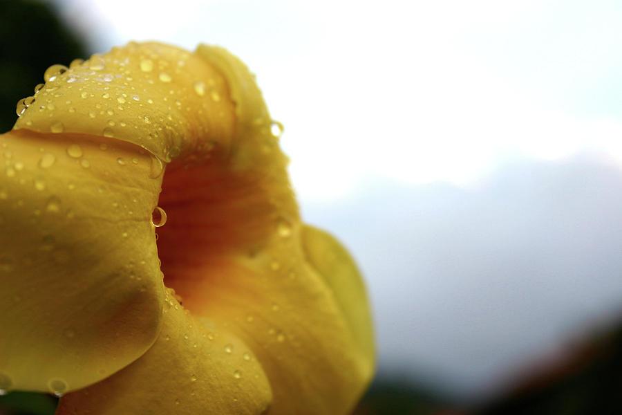 Droplets Photograph