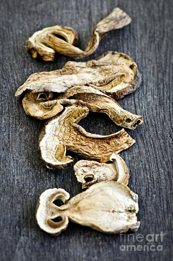 Dry Porcini Mushrooms Photograph