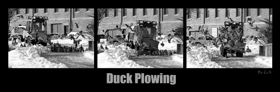 Duck Plowing Photograph