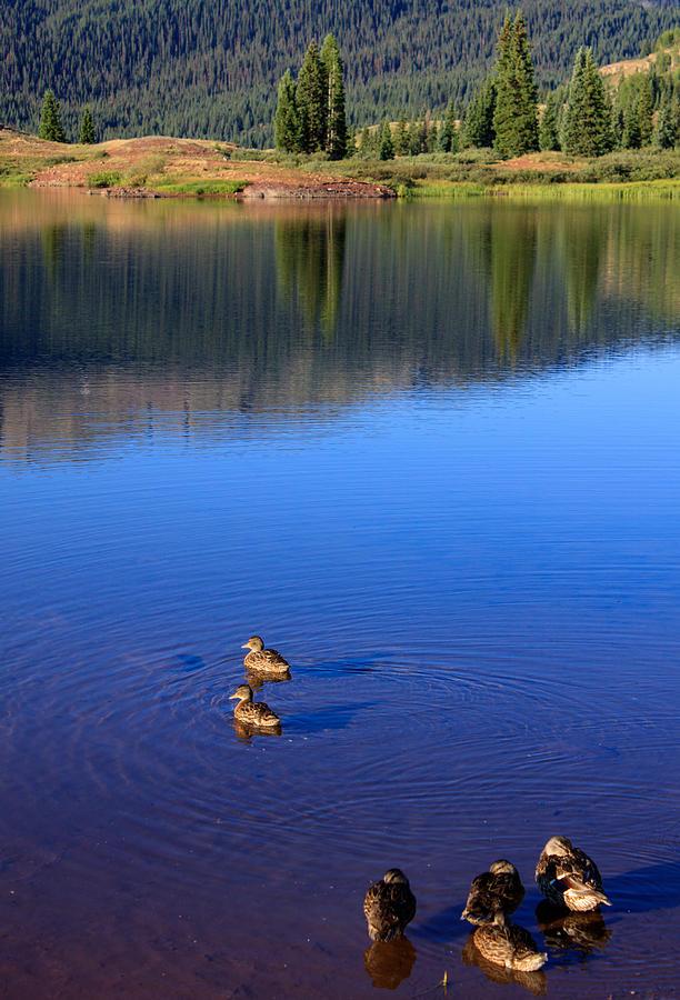 The Hidden Bloods Lake Ducks-in-a-pond-paul-gana