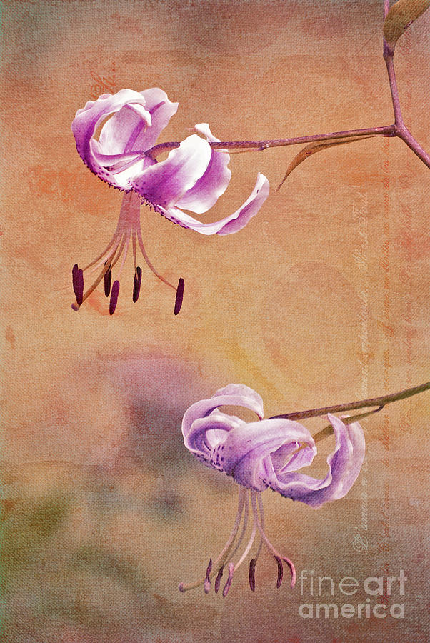 Lily Photograph - Duet 05c by Aimelle