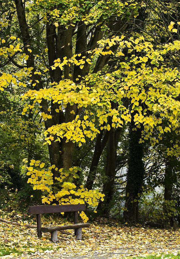 Dun Na Ri Forest Park, County Cavan Photograph