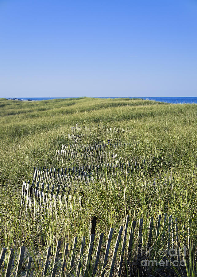 Dune Fence Photograph
