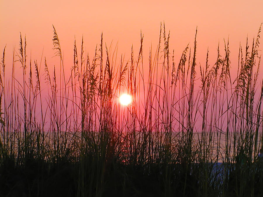 Dune Grass Sunset Photograph  - Dune Grass Sunset Fine Art Print