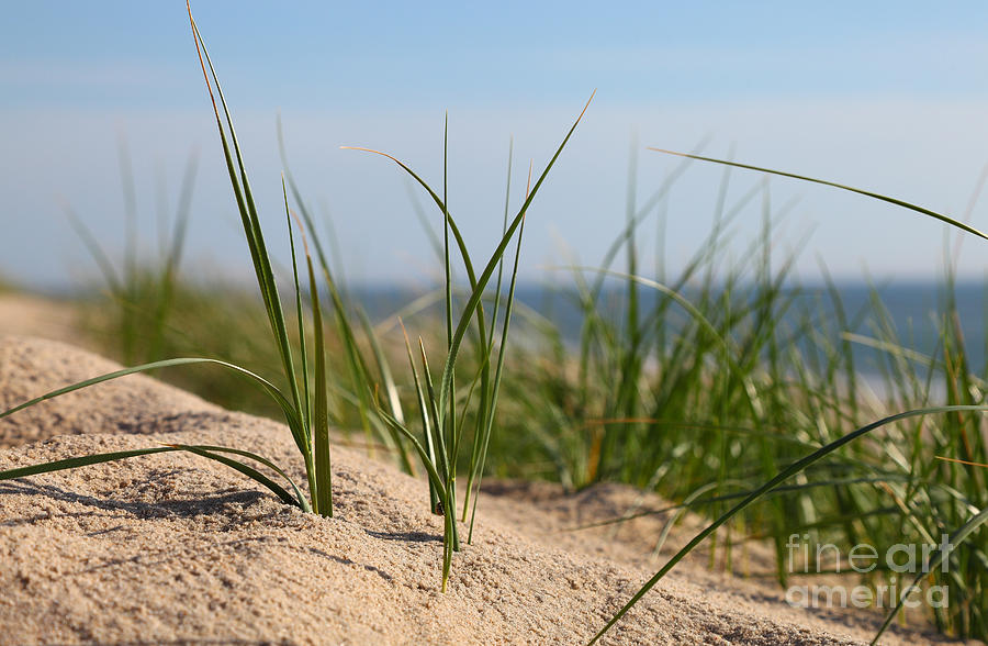 Dune Photograph - Dune by Holger Ostwald