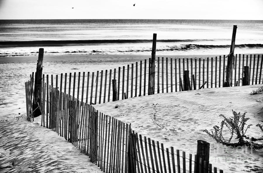 Dune Protection Photograph  - Dune Protection Fine Art Print