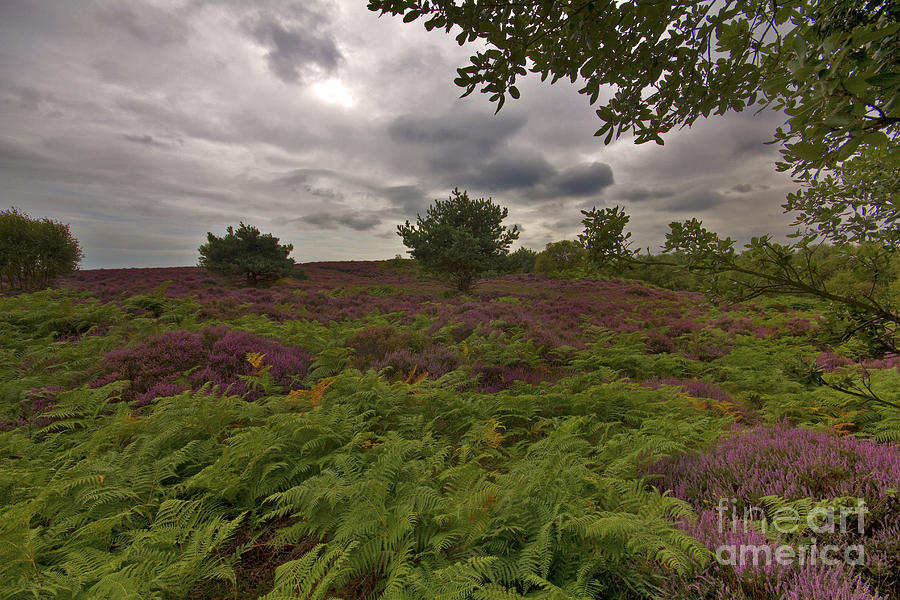 Dunwich Heath Photograph