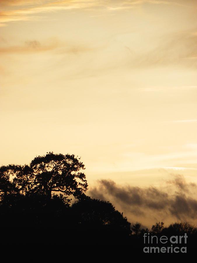 Dusk Photograph - Dusk Forest  by Pixel Chimp