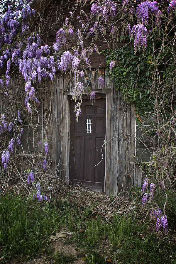 Dutch Fork Door Wisteria Photograph  - Dutch Fork Door Wisteria Fine Art Print