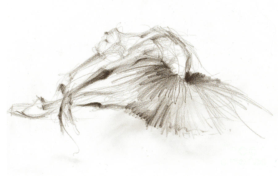 Dying Swan Or Ballerina In White Tutu Drawing
