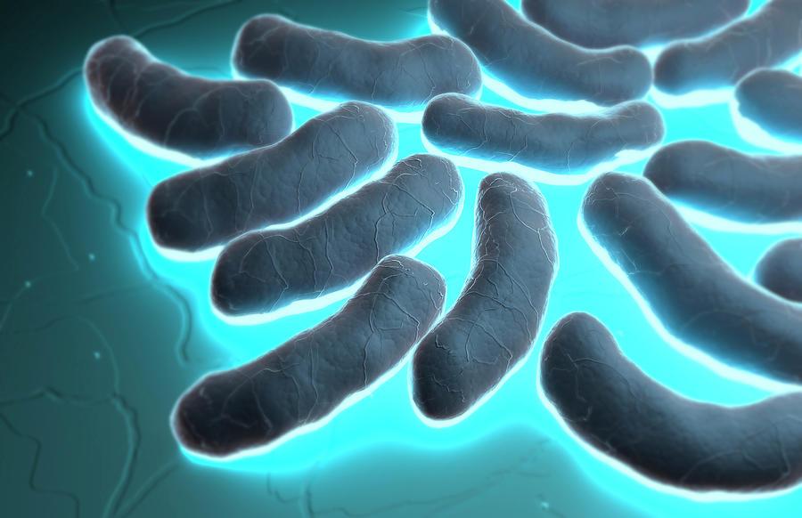 E Coli Reptiles E  Coli Art - E-coli Cells by