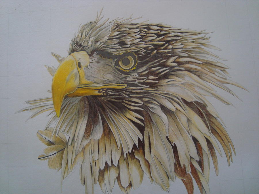 Eagel Drawing  - Eagel Fine Art Print
