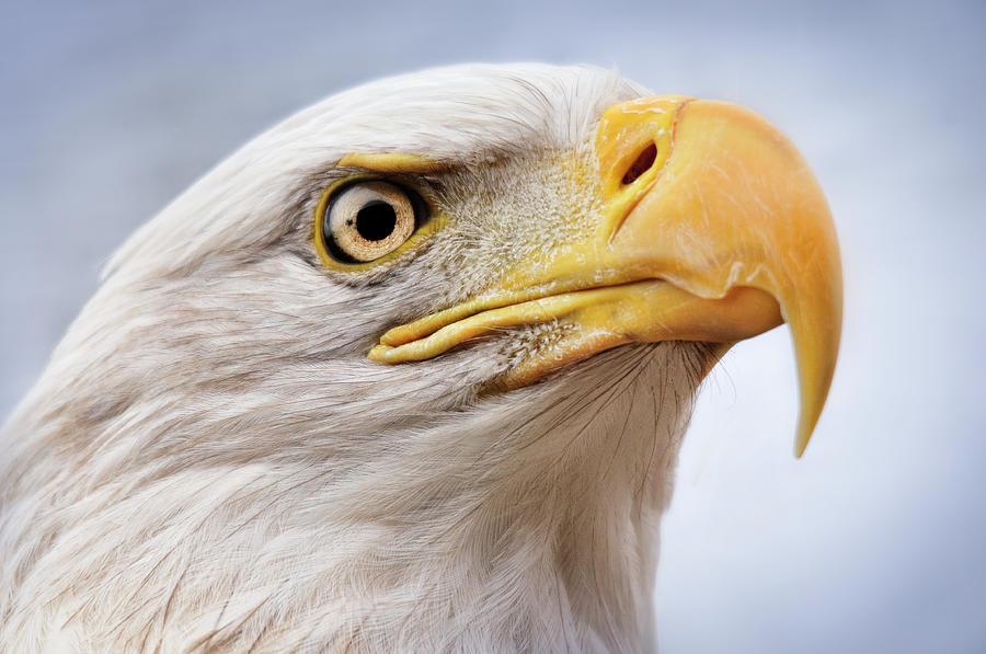 Eagle Eye by Amanda Horst