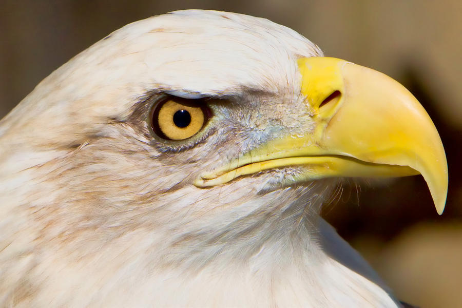 Eagle Eye by William Jobes