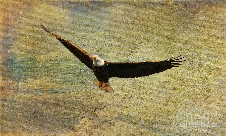 Eagle Medicine Photograph