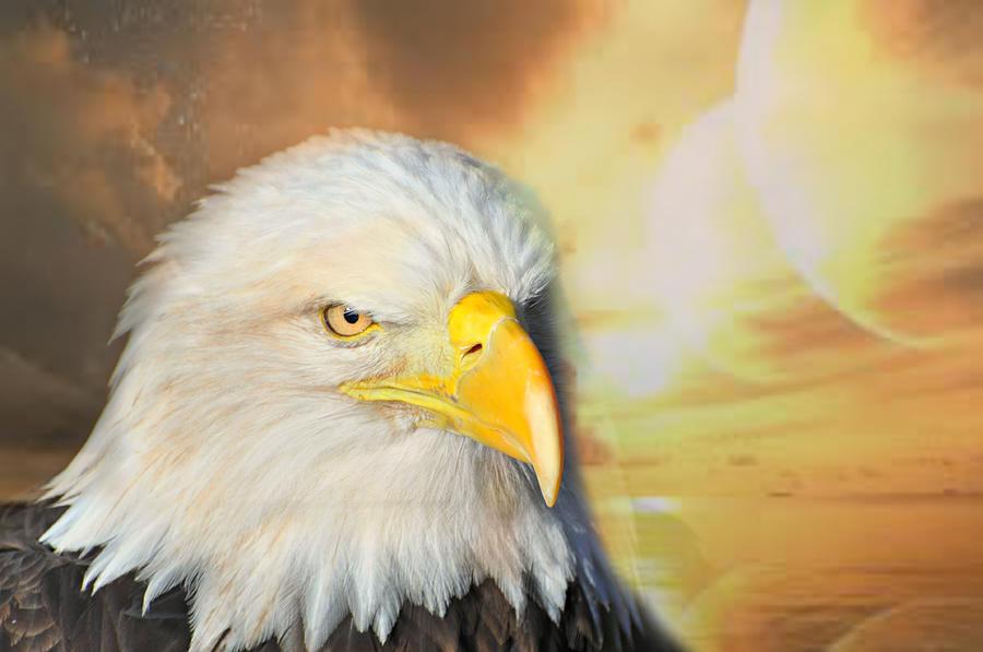 Eagle Photograph - Eagle Sun by Marty Koch