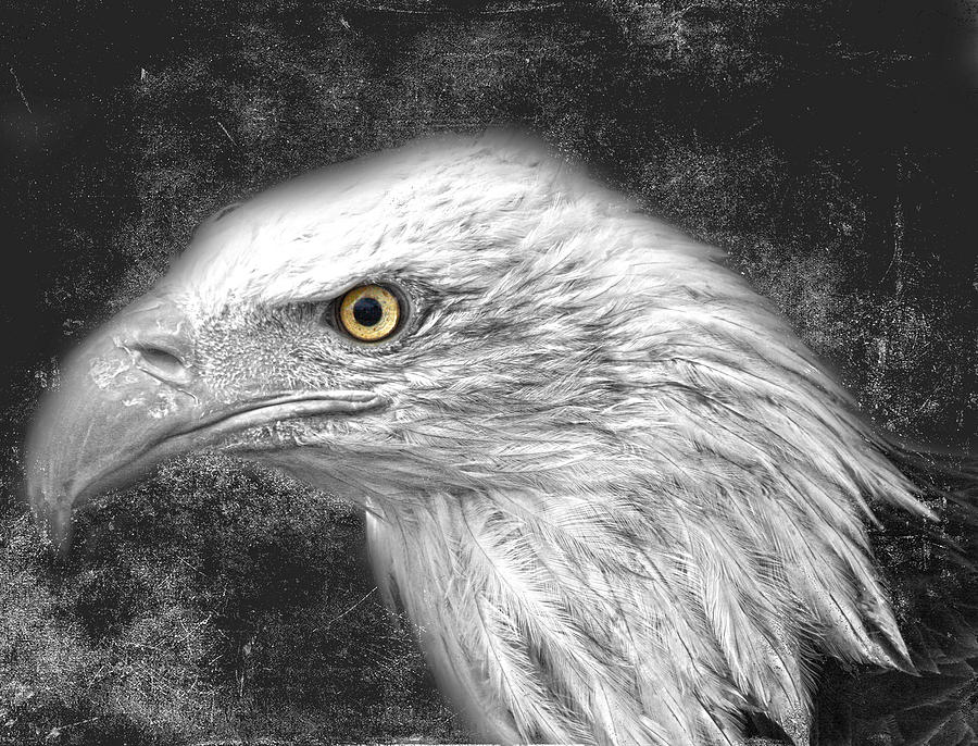 Eagle Two Photograph  - Eagle Two Fine Art Print