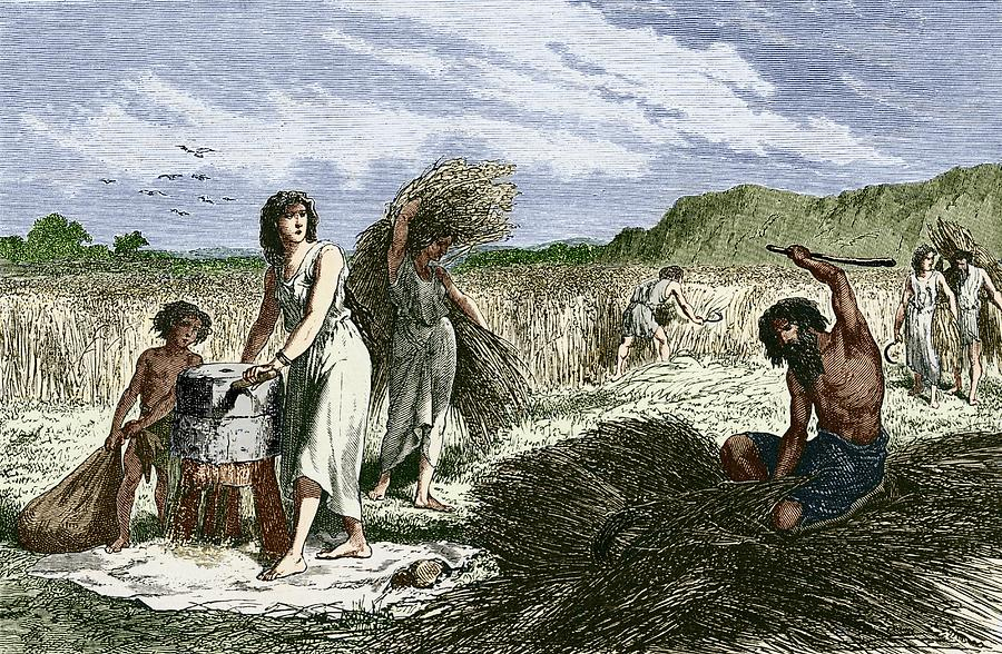 Early Humans Harvesting Crops Photograph