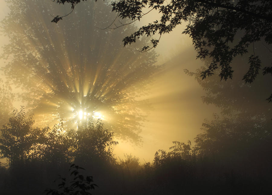 Early morning foggy sunrise by randy steele for Morning sunrise images