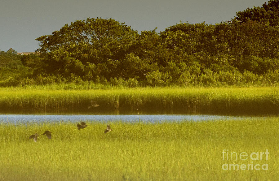 East Hampton Serenity Photograph  - East Hampton Serenity Fine Art Print