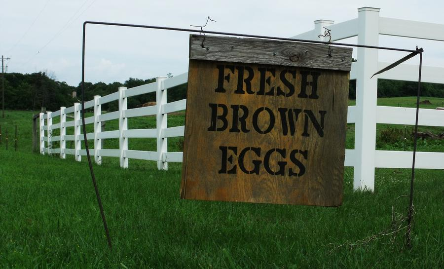 Eggs For Sale Photograph