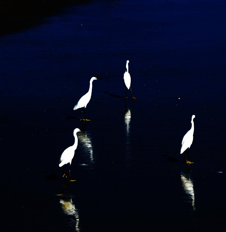 Egret Reflections Digital Art