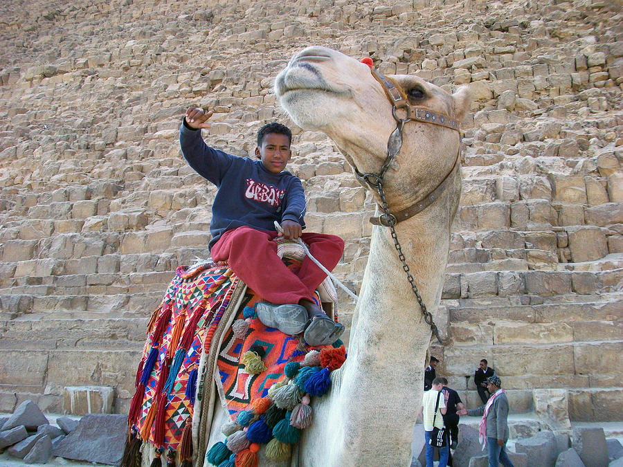 Egypt - Boy With A Camel Photograph  - Egypt - Boy With A Camel Fine Art Print