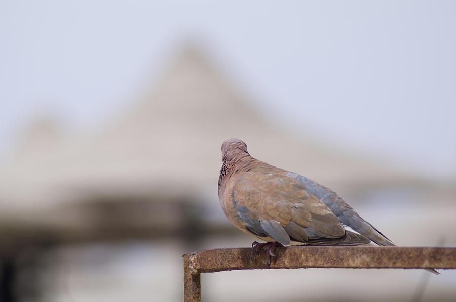 Egypt Photograph