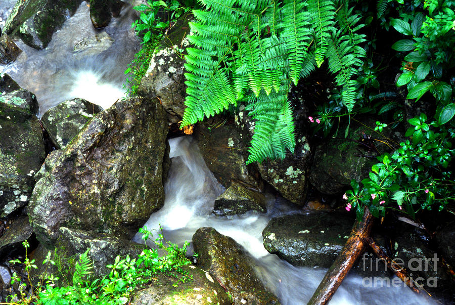 El yunque rainforest water photograph
