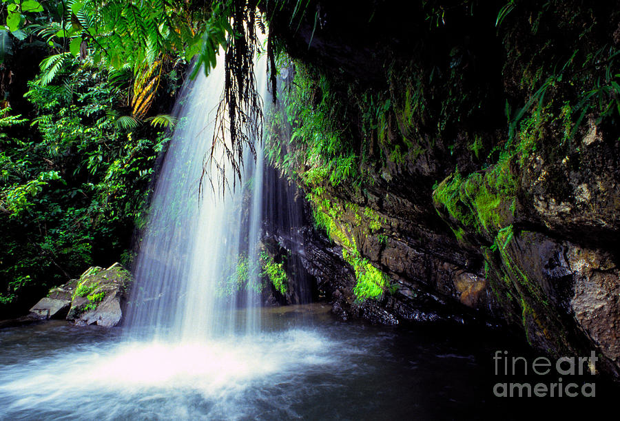 El Yunque Waterfall Photograph  - El Yunque Waterfall Fine Art Print