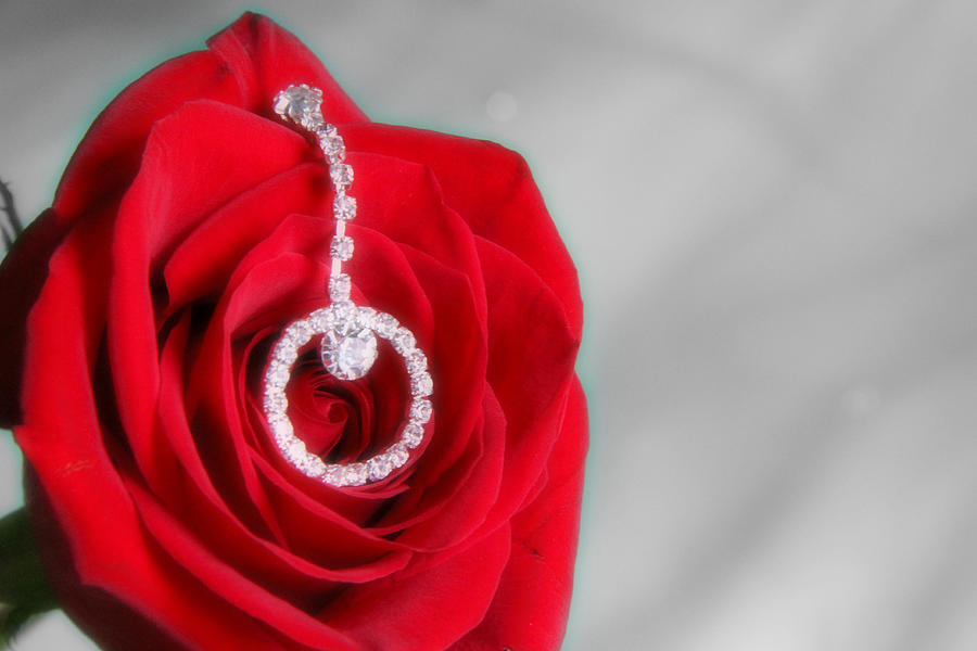 Rose Photograph - Elegance In Selective Color by Mark J Seefeldt