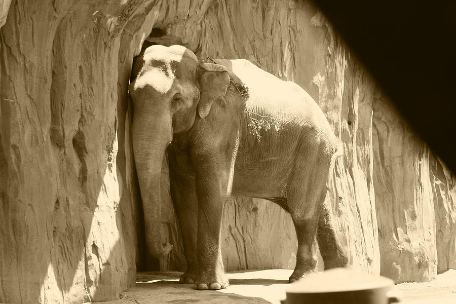 elephant-against-the-wall-kym-backland.j