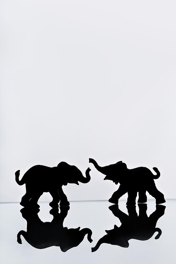 Elephant Pair Reflection Photograph