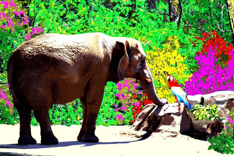Elephant-parrot Dialogue Photograph  - Elephant-parrot Dialogue Fine Art Print