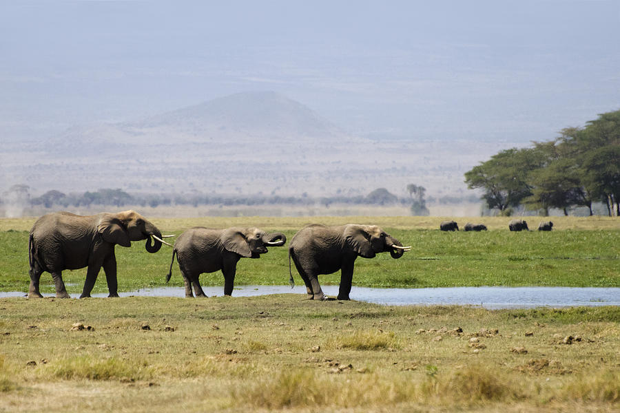 Elephants At The Watering Hole Photograph