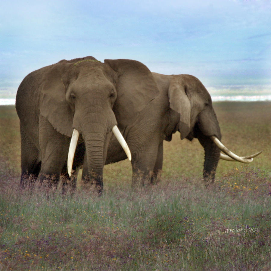 Elephants Of The Crater Photograph