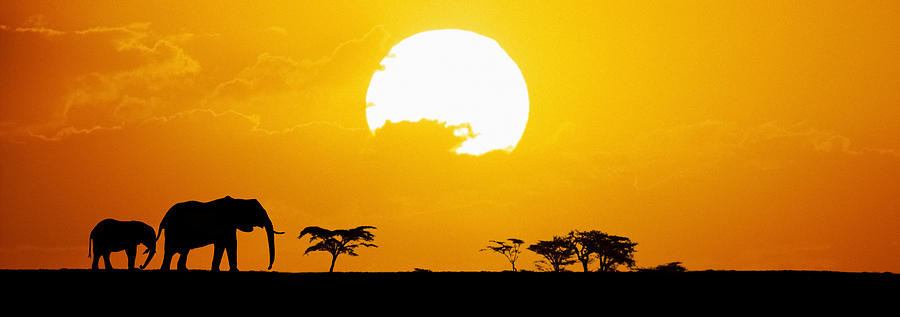 Elephants Silhouetted At Sunset Photograph