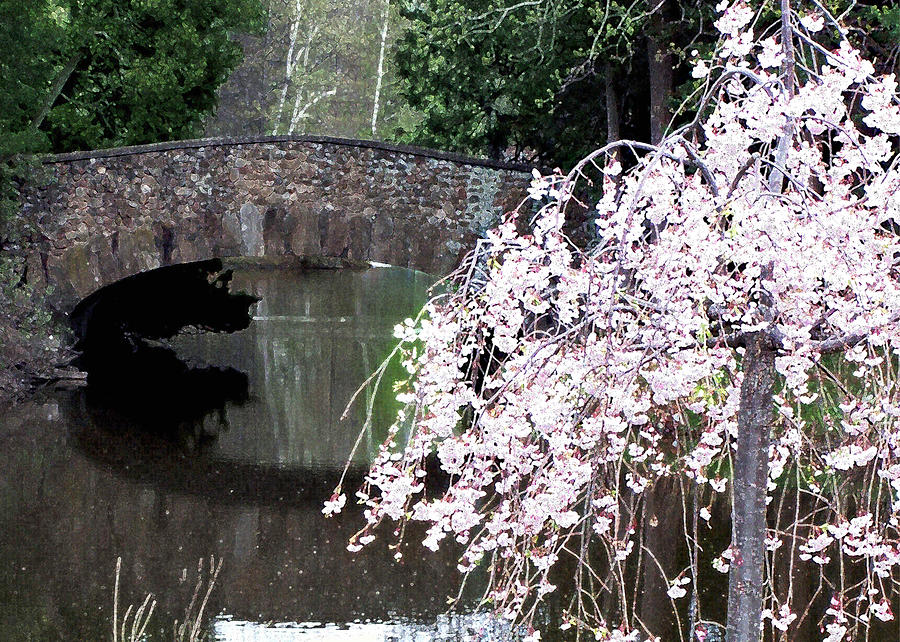 Elizabeth Bridge And Cherry Blossoms Painting  - Elizabeth Bridge And Cherry Blossoms Fine Art Print