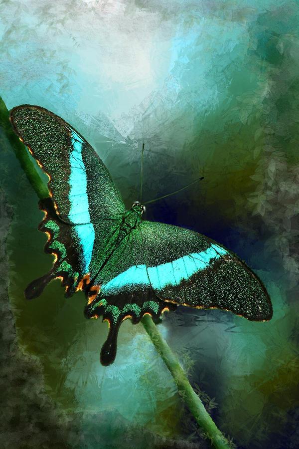Emerald Peacock Swallowtail Photograph