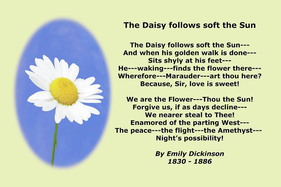 Poems About ... Poems About Daisy Flowers