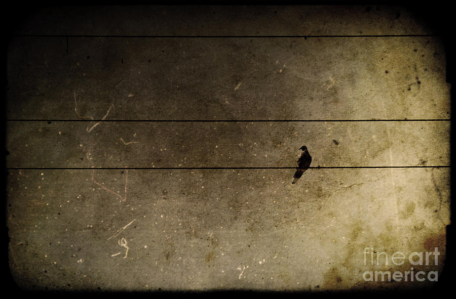 Bird Photograph - Emotional Distance by Andrew Paranavitana