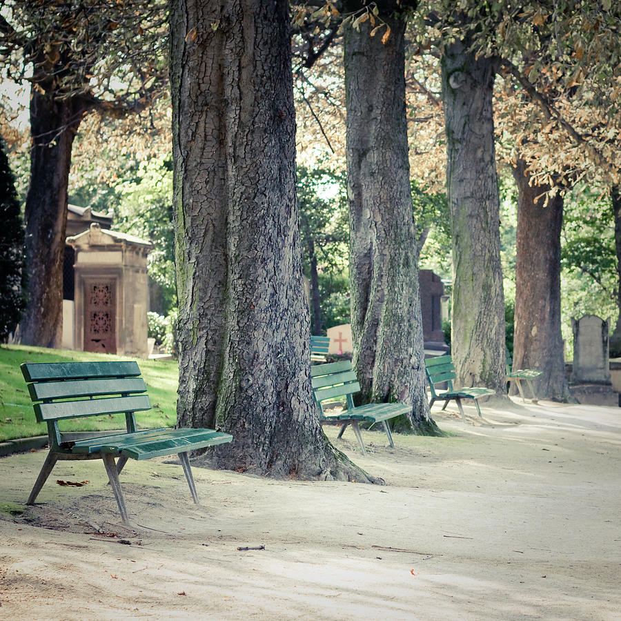 Empty Benches Lined Up With Trees Photograph by Cindy Prins