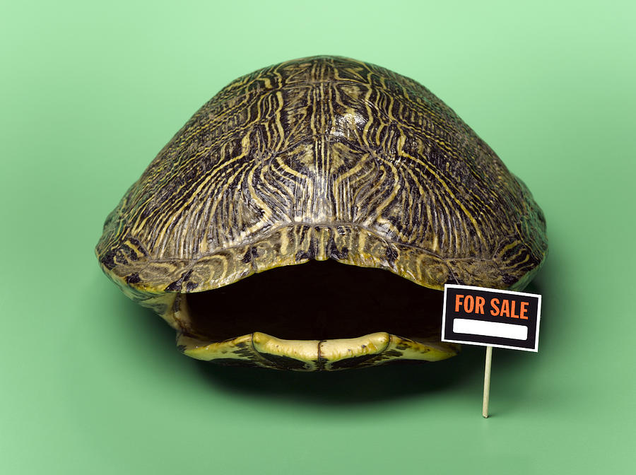 Horizontal Photograph - Empty Turtle Shell With For Sale Sign by Jeffrey Hamilton