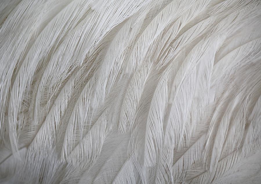 Emu Feathers Photograph