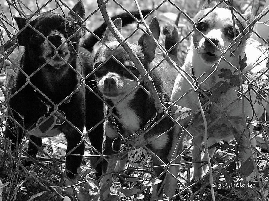 Encarcelados Chihuahuas Digital Art