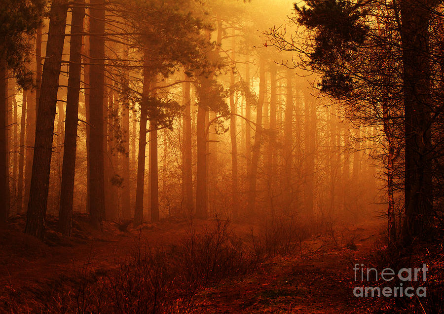 Enchanted Forest Photograph  - Enchanted Forest Fine Art Print
