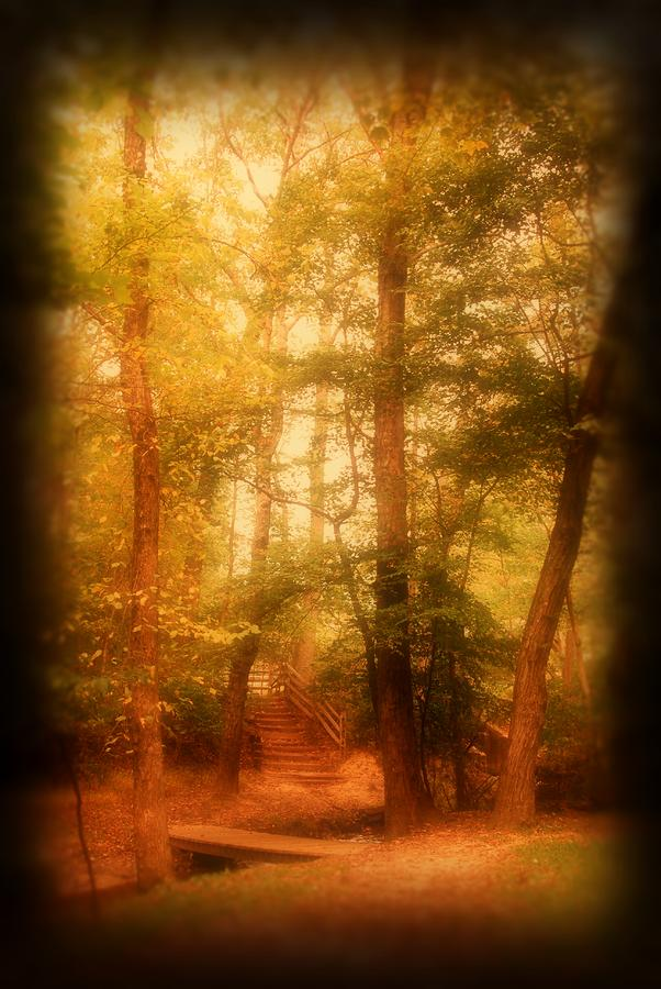 Enchanted Path 2 - Allaire State Park Photograph  - Enchanted Path 2 - Allaire State Park Fine Art Print