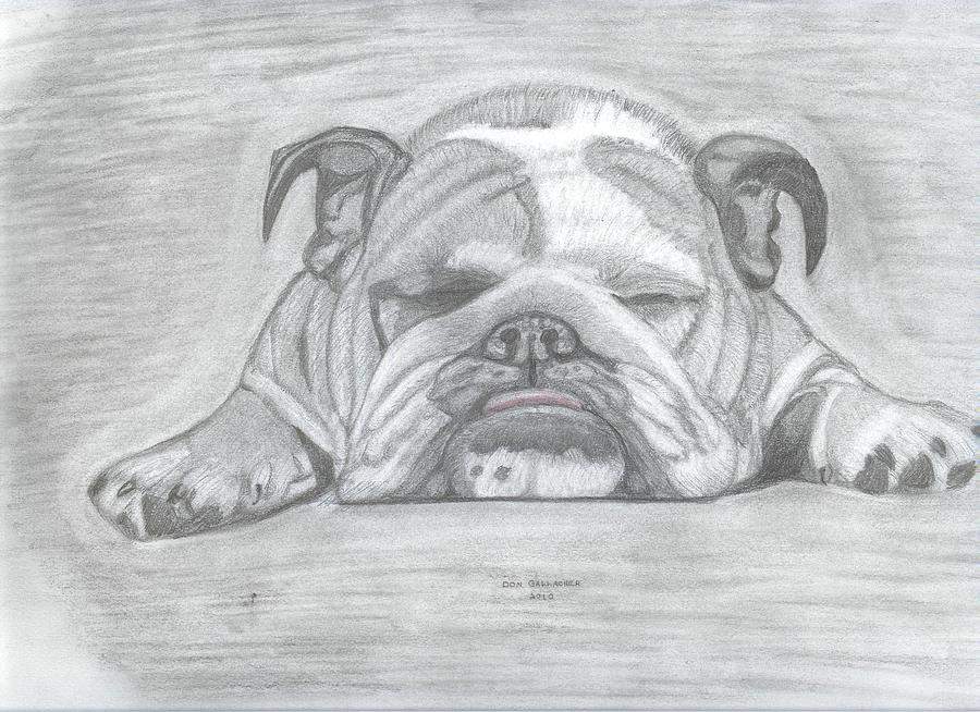 English Bulldog by Don Gallacher